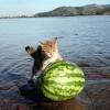 Watermelon Rolling